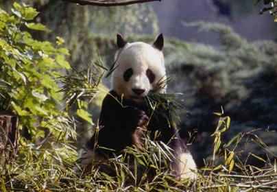 Elephant free list panda porn site