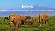 Germany MA IvoryID database