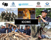 The International Consortium on Combating Wildlife Crime
