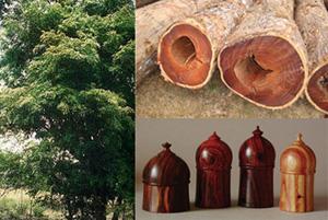 Cites Extends Trade Controls To 111 Precious Hardwood