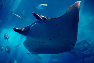 Tropical ocean animals and plants - photo#7